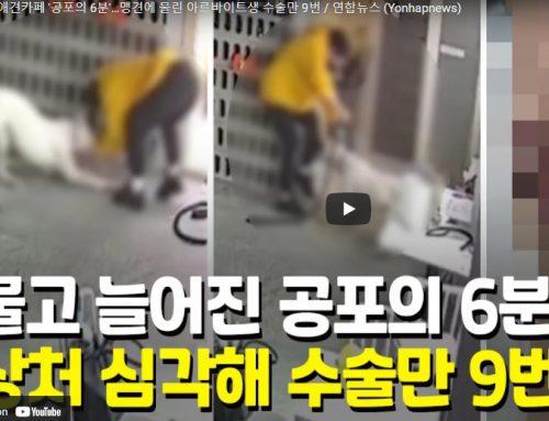 [영상] 애견카페 '공포의 6분'…맹견에 물린 아르바이트생 수술만 9번