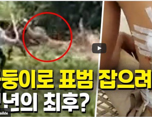 [영상] 눈 깜짝할 새…몽둥이 든 청년 할퀴고 도망간 표범