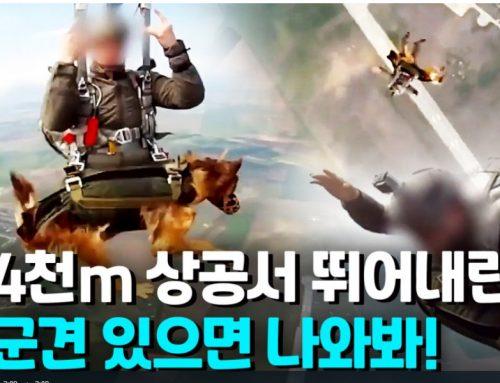[영상] 4천m 상공서 점프하는 군견